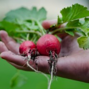 Fall and Winter Gardening at the Community Garden